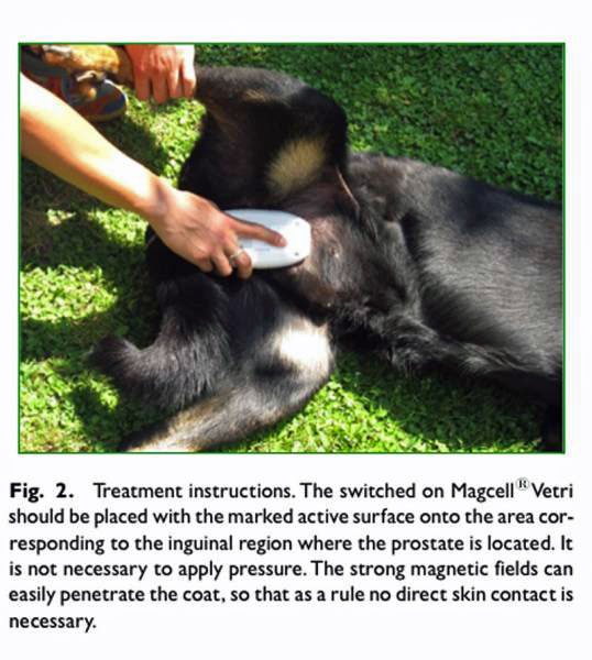 treatment for enlarged prostate in dogs