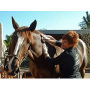 DEEP OSCILLATION® Personal Sports in Equine